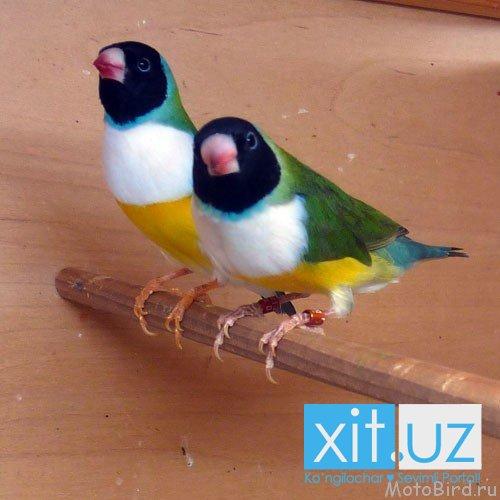Птицы строят семьи по любви